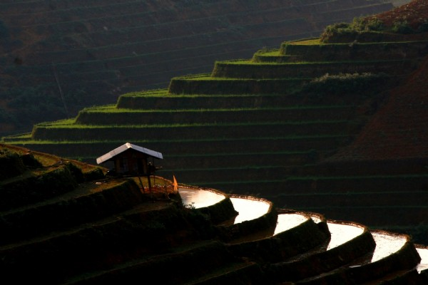 Terraces field in Mu Cang Chai